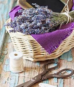 Lavendel Schneiden Im Herbst : 1000 ideas about lavendel rosen auf pinterest lila ~ Lizthompson.info Haus und Dekorationen