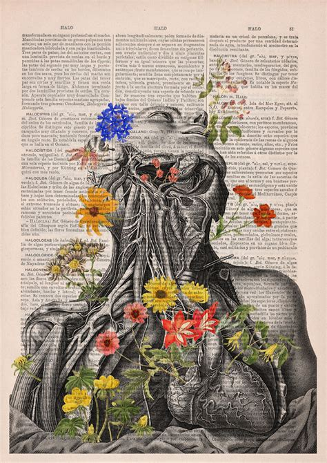 floral anatomy illustrations   pages   books