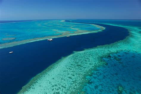 reef barrier australia island hamilton coral islands die sbs grande did really sinhalese dead bleaching gbr whitsundays beach queensland nature