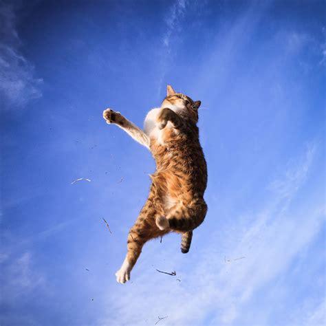 jumping cats  play   ninjas bored panda