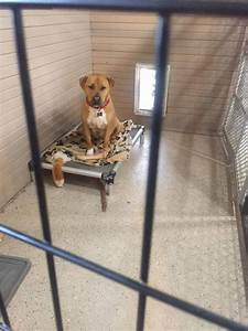 No One Wants To Adopt This Dog, And Shelter Staff Just Can ...