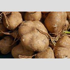 Health Benefits Of Eating Jicama  Health Benefits Of