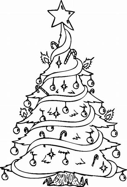 Coloring Tree Decorated Pretty Drawing Decorations Trees