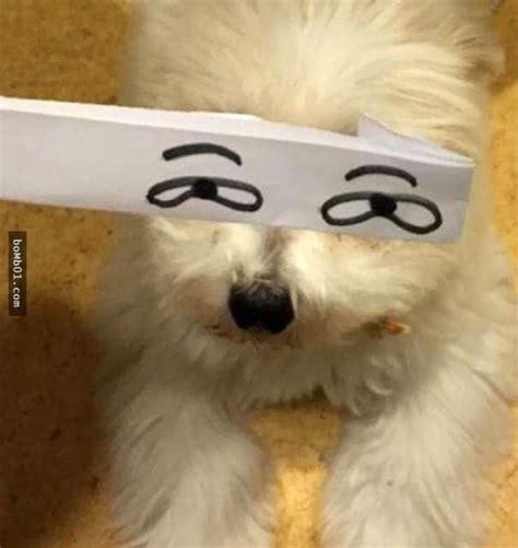 chistosas fotos de mascotas  ojos dibujados