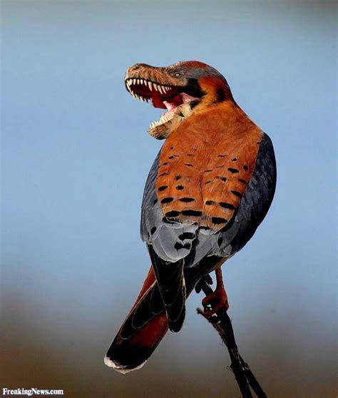 birdnote knkx