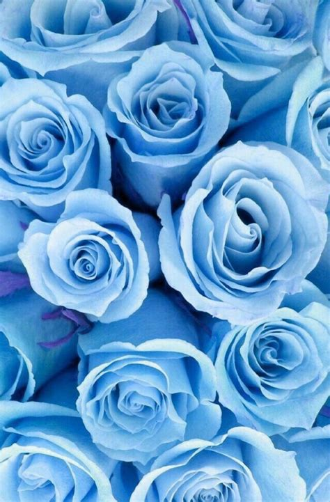 pin by on random blue wallpaper iphone blue