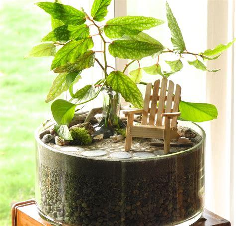 mini indoor garden indoor plants the mini garden guru your miniature