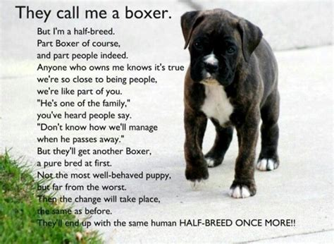 17 Best Images About Boxer Love On Pinterest