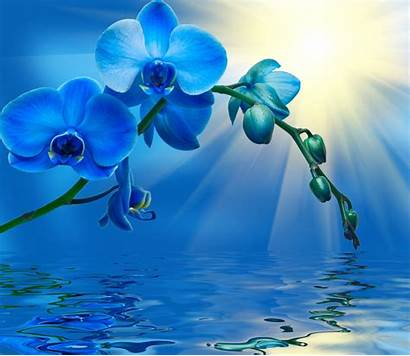 Orchid Orchids Flowers Bunga Cantik Flower Gambar