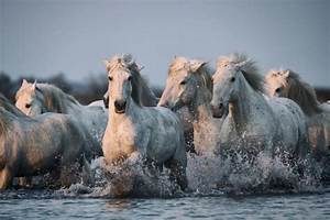 Horse Wallpapers HD Pictures – One HD Wallpaper Pictures ...