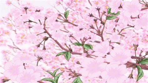 Cherry Blossom Animated Wallpaper - 34 best cherry blossom images on cherry