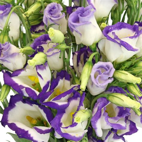 blue flower wall lisianthus flower 27 click collection 10 wallpapers