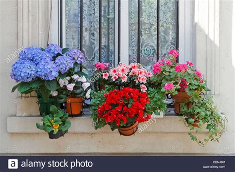 Window Potted Plants by Flowers On A Windowsill In Potted Plants
