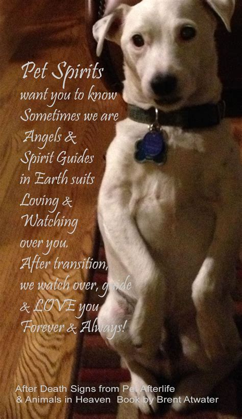 inspirational dog loss quotes  animal souls  brent