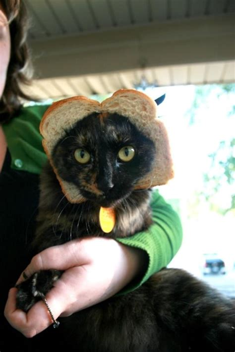 Image 243065 Cat Breading Know Your Meme