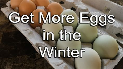 How To Get More Eggs From Your Chickens In Winter Youtube