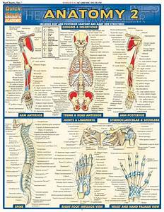 Anatomy 2 Quickstudy  6 95 Loaded With Beautifully