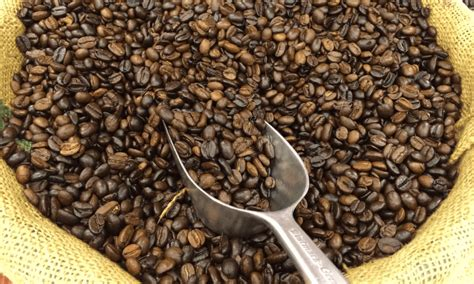 Climate Change Could Kill Off Ethiopian Coffee Within 70 Blue Bottle Coffee Lower East Side Pots At Meijer Keurig Nakameguro Sf In Hong Kong Quotes Pinterest Harvard Square