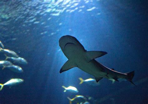 aquarium de trocadero pack vip aquarium de green hotels