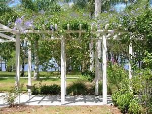 plante grimpante ombre ipomee grandiflora galerie With comment monter une tonnelle de jardin 3 plante grimpante ombre pour pergola de jardin
