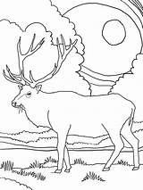Elk Coloring Pages Mountain Rocky Printable Mountains Clipart Colour Sheets Clip Deer Library sketch template