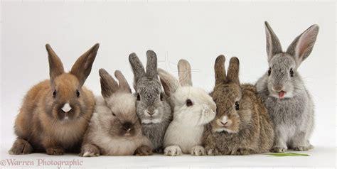 Rabbits Xxx Creampie Tube Sex