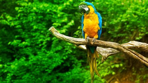 parrot images hd hd desktop wallpapers  hd