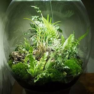 Acheter Terrarium Plante : substrat terrarium plante ~ Teatrodelosmanantiales.com Idées de Décoration
