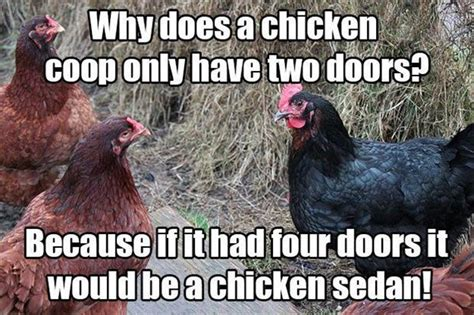 Hen Meme - funny chickens jokes www pixshark com images galleries with a bite