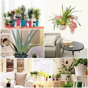 In Welchem Zimmer Rauchmelder : zimmerpflanze f r jedes zimmer passend ausw hlen ~ Bigdaddyawards.com Haus und Dekorationen