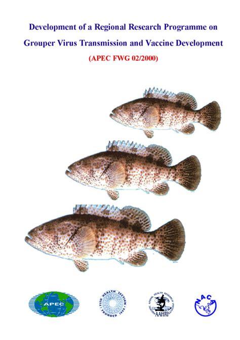 grouper virus disease transmission apec development pdf