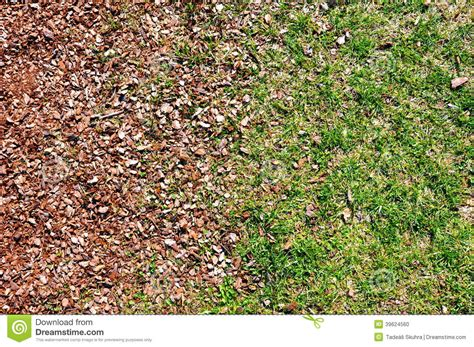 how to mulch grass grass and mulch stock photo image 39624560