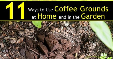11 Ways To Use Coffee Grounds In The Garden