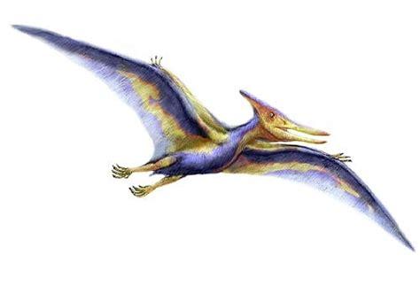 Dinosauro Volante Pt 233 Ranodon Article Sur Ce Reptile Volant Un Diapside En