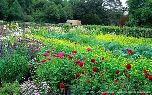 Plantes Amies Et Ennemies Au Potager : title blog promesse de fleurs ~ Melissatoandfro.com Idées de Décoration