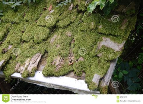 Old Moss Covering The Roof Stock Image. Image Of Deserted Rubber Roof Sealer Roofing Contractors Marietta Metro Products Columbia Md Motorhome Coating Aluminum Shingles Repair Ga Barn Vents