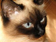felis silvestris catus wikipedia
