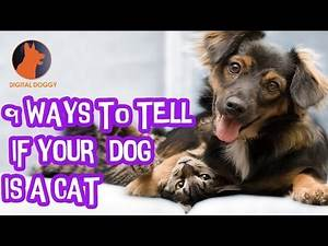 9 Ways to Tell If Your Dog is A Cat