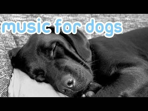 Soothing Music to Relax Your Dog! Calm Your Dog and Combat Anxiety!