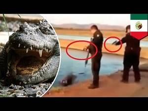 Crocodile attack: Mexican cop machine guns croc in video