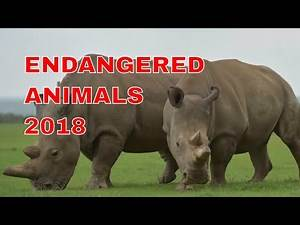 The most endangered animals in the world 2018 (sub-ita)
