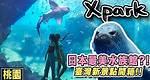 北部最大水族館!臺灣最新景點550元值得嗎??| Xpark水族館|桃園景點