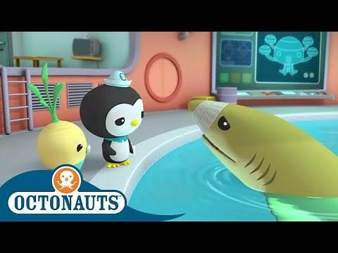 Octonauts - Baby Sharks! | Cartoons for Kids | Underwater Sea Education