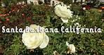 The Rose Garden at Mission Santa Barbara