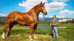 The BIGGEST HORSES In The World 🐎