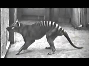 15 Extinct Animals That May Still Be Alive Today