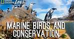 Photographing our Seas: Marine Birds and Conservation   Nat Geo Live