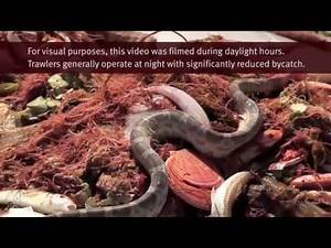 Amazing Fishers Of Men Handling Sea Snakes And Bycatch Fishing