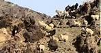 Deserts and Life The Gobi Desert Prt 3