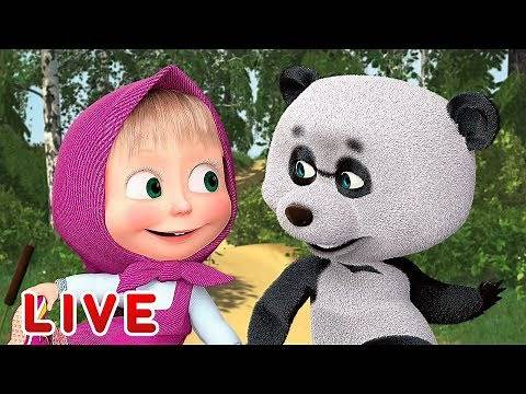 Masha and the Bear 🎬💥 LIVE STREAM 💥🎬 All episodes for kids 👶 Cartoon live best episodes